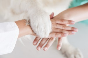 Handshake between dog and veterinarian hand
