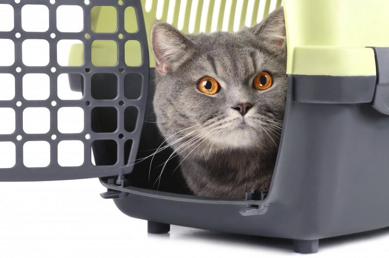 Crate Trained Cat