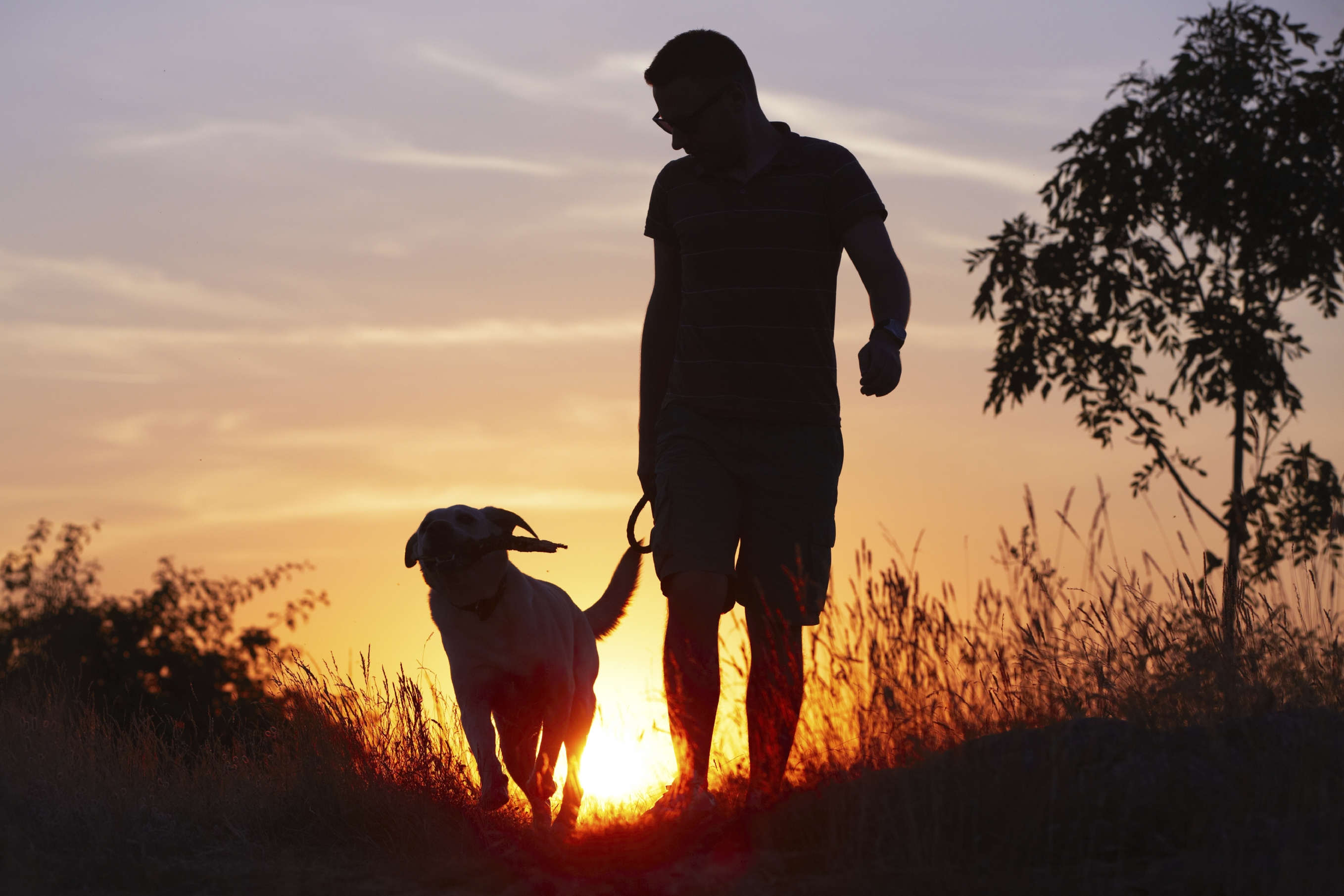 a silhouette of a man walks his dog at sunset