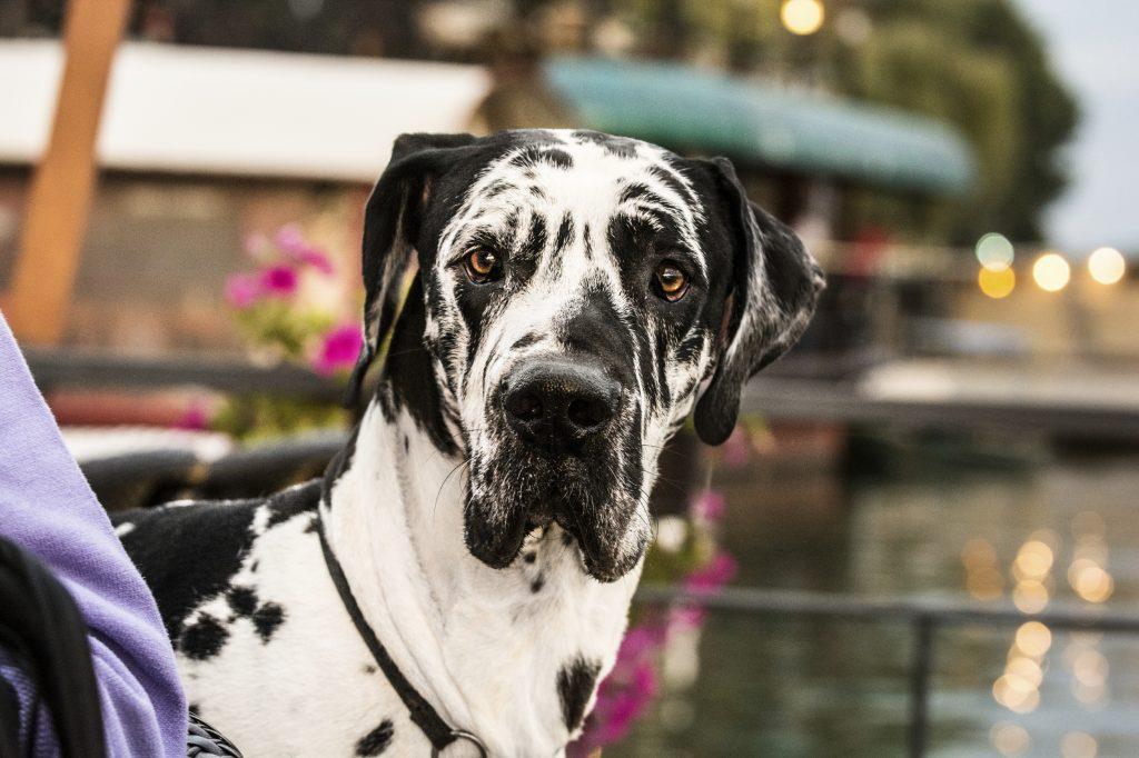 Pet Arthritis_iStock_000075088461_Large