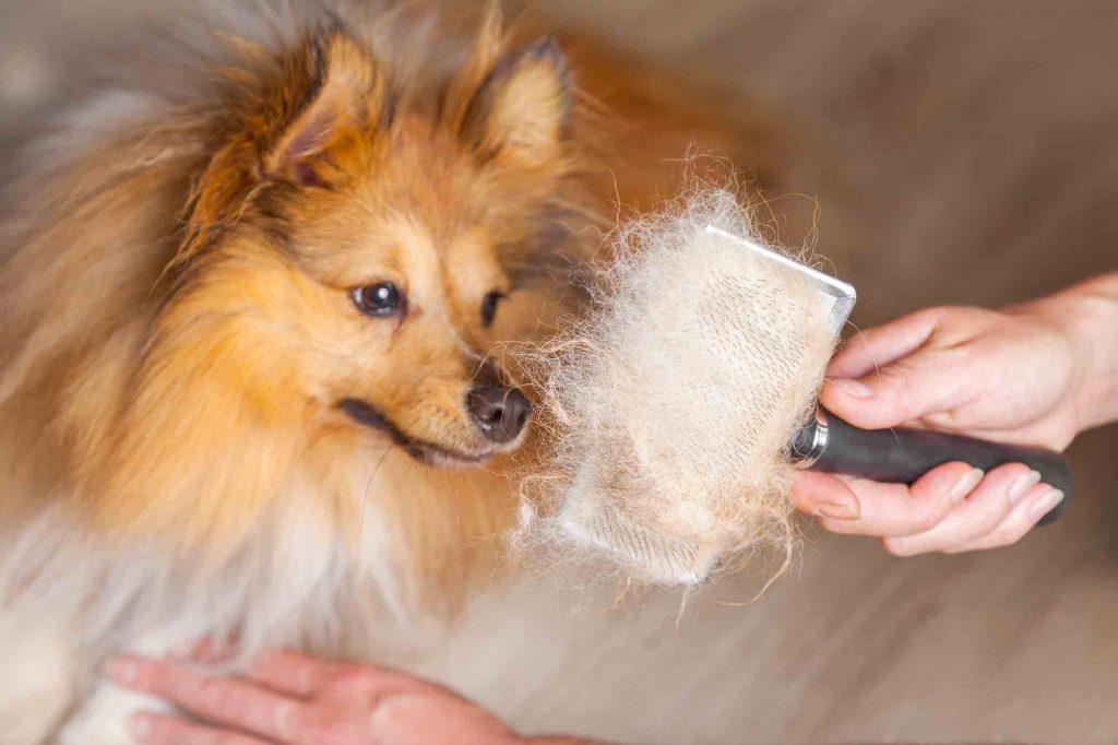 Pet hair on a brush