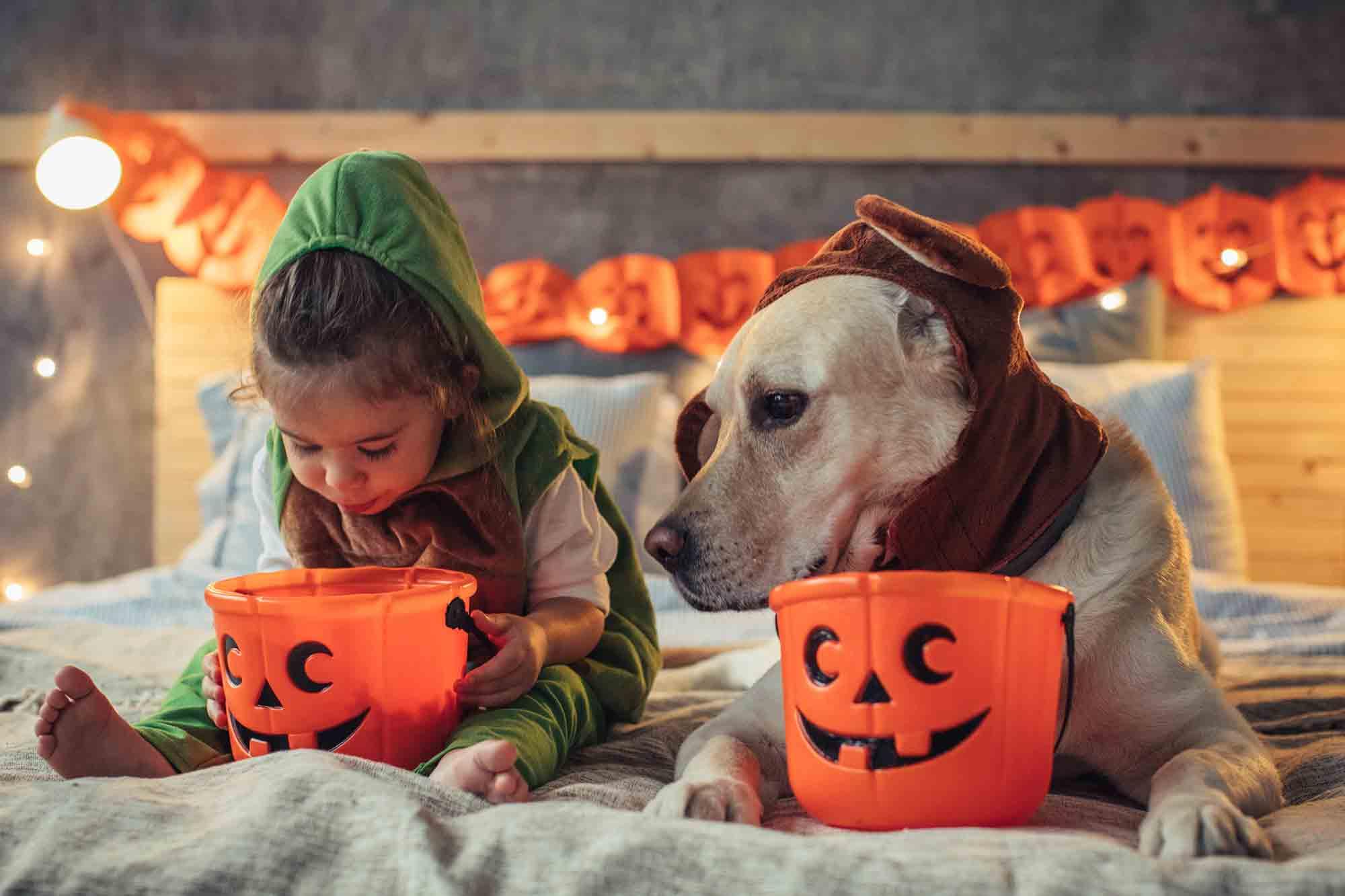 Vet Halloween Costume