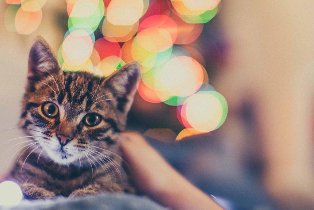 A cat amongst decorations