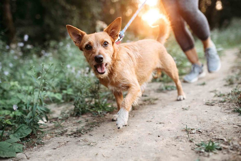 how much exercise does a pet really need