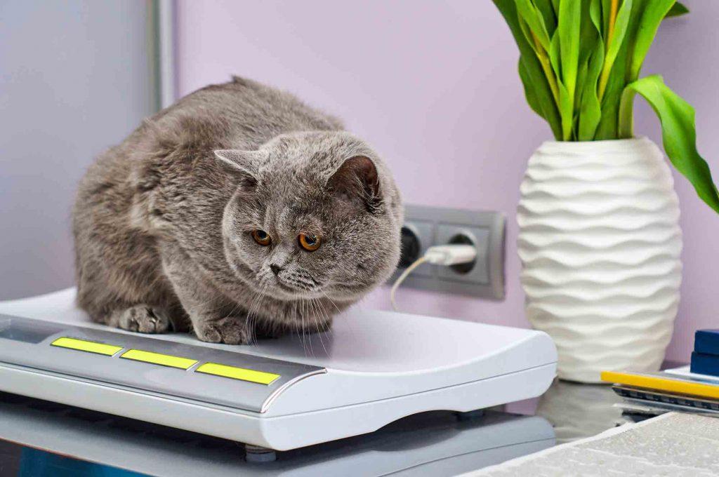 Pet Weight Gain