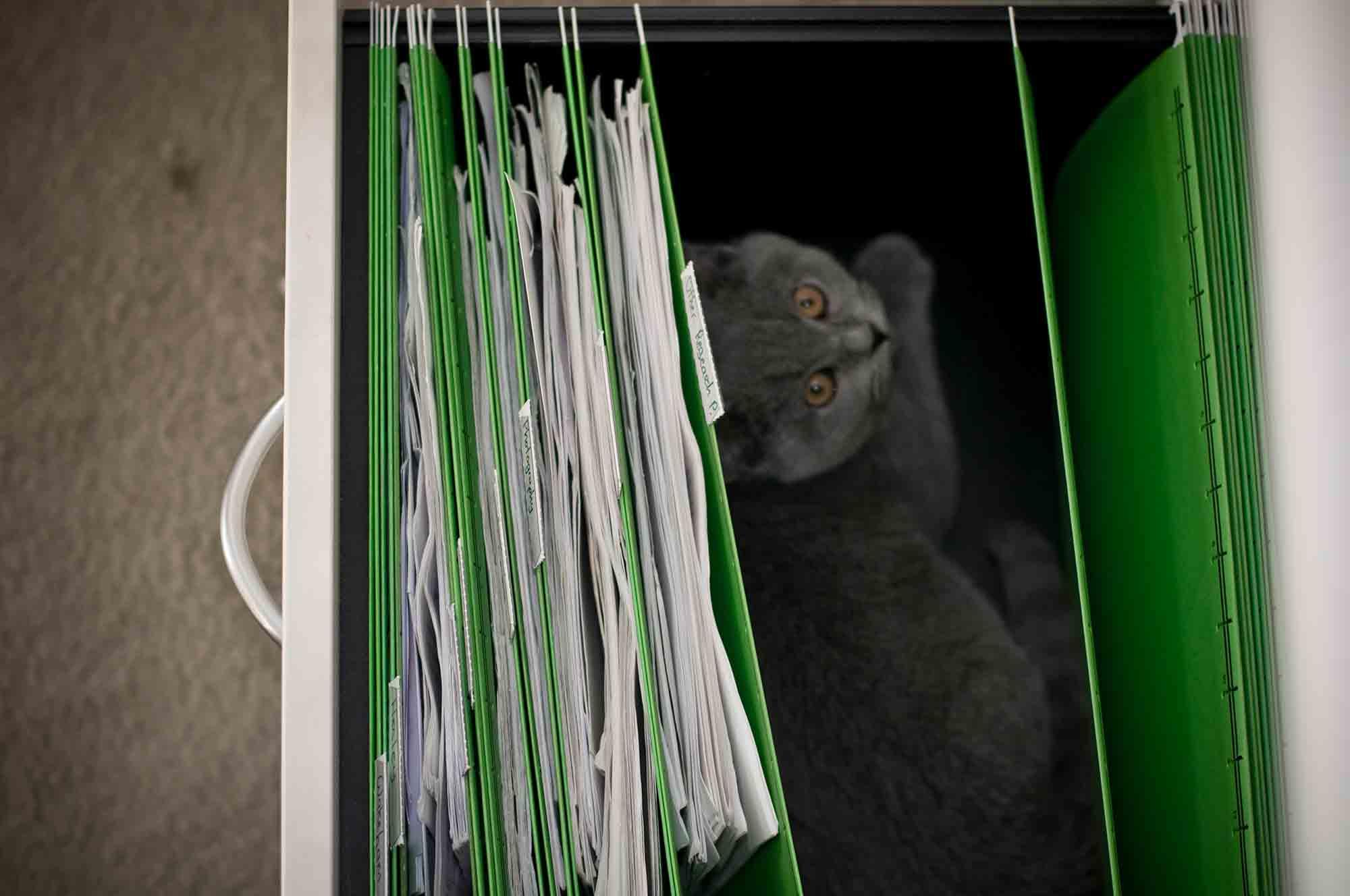 A cat sitting in a file cabinet