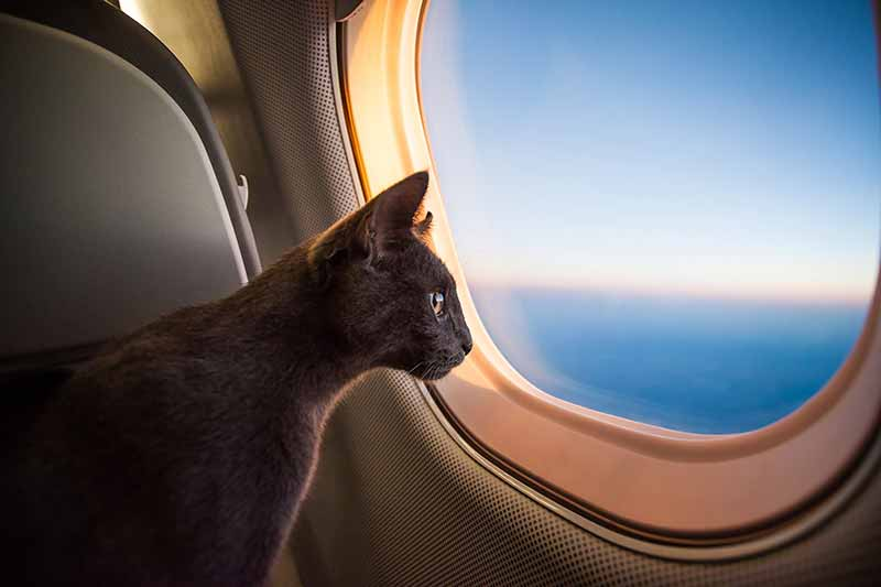 New airline regulations for pets can make traveling with pets safer.