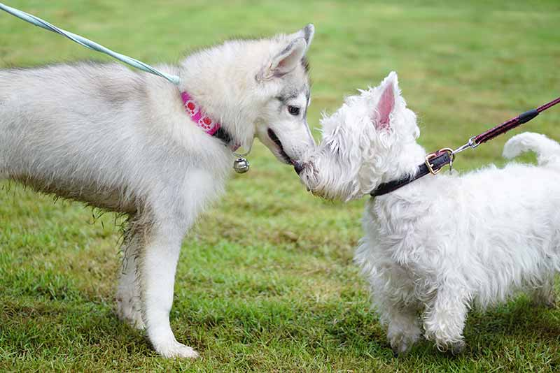 Dog park etiquette can make playing with your dog fun