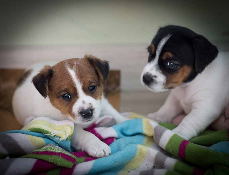 If you socialize your puppy, dog training and dog behavior will be better, later in life.
