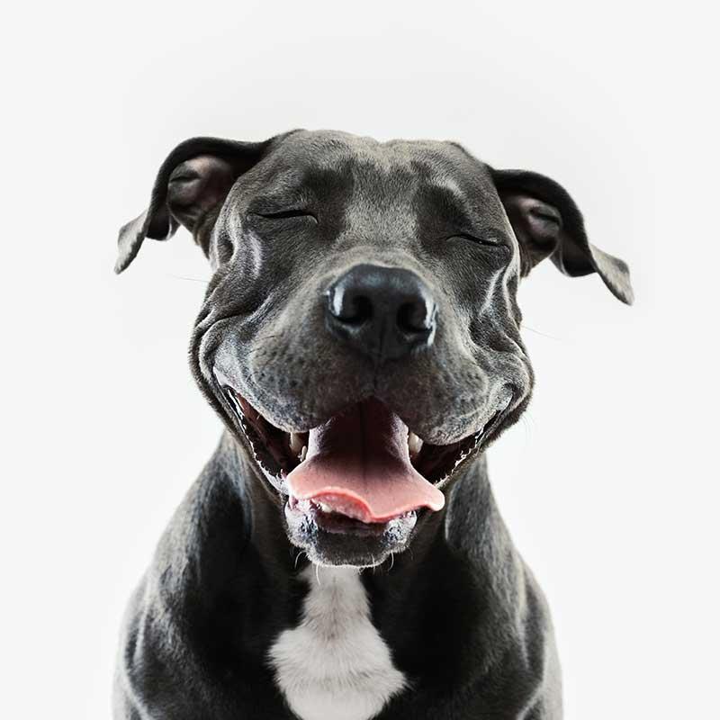 Funny pets may really have a sense of humor