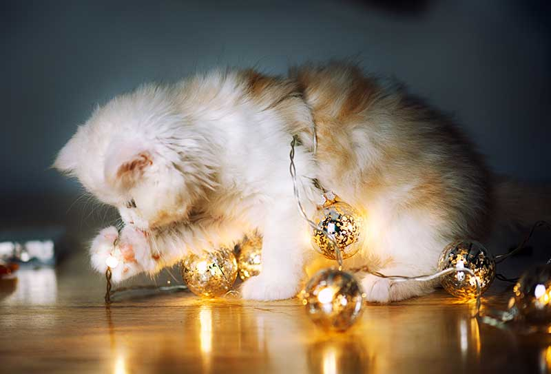 Holiday pet safety can help prevent a holiday pet emergency
