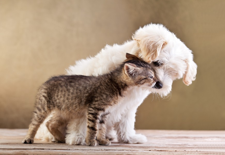 Puppy and kitten wellness exams are a good start for lifelong pet wellness.