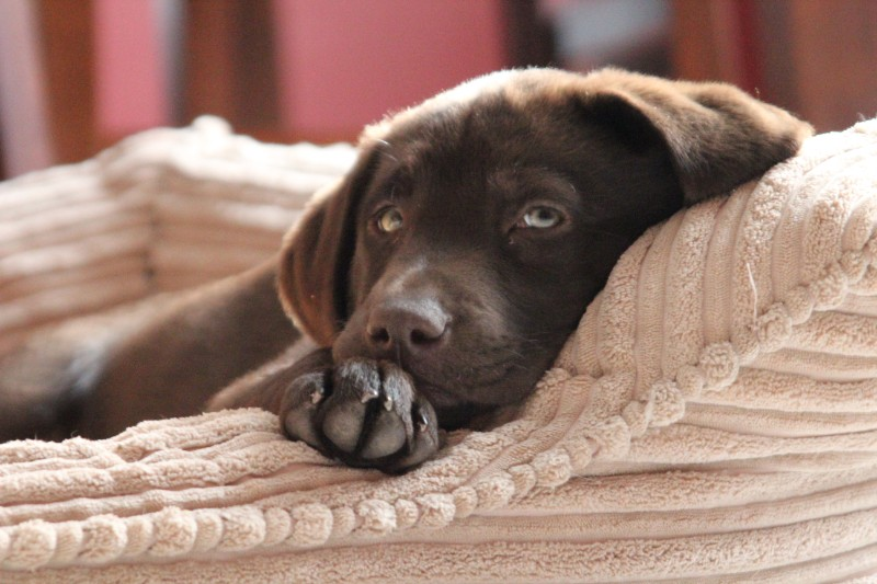 Heated pet bed safety can protect your pet