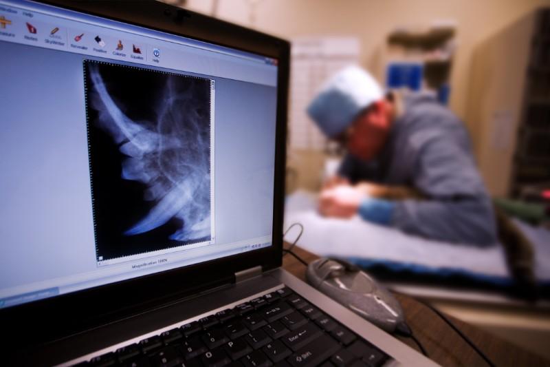 Pet dental X-rays are vital to the pet dental exam.