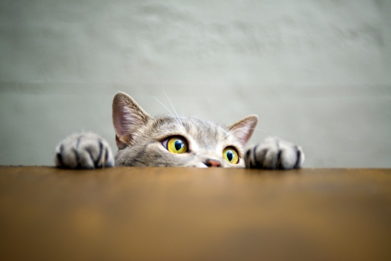 A cat peeking above a desk