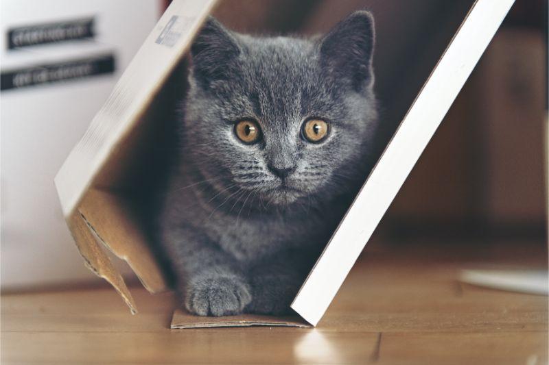 A gray kitty hiding in a corner