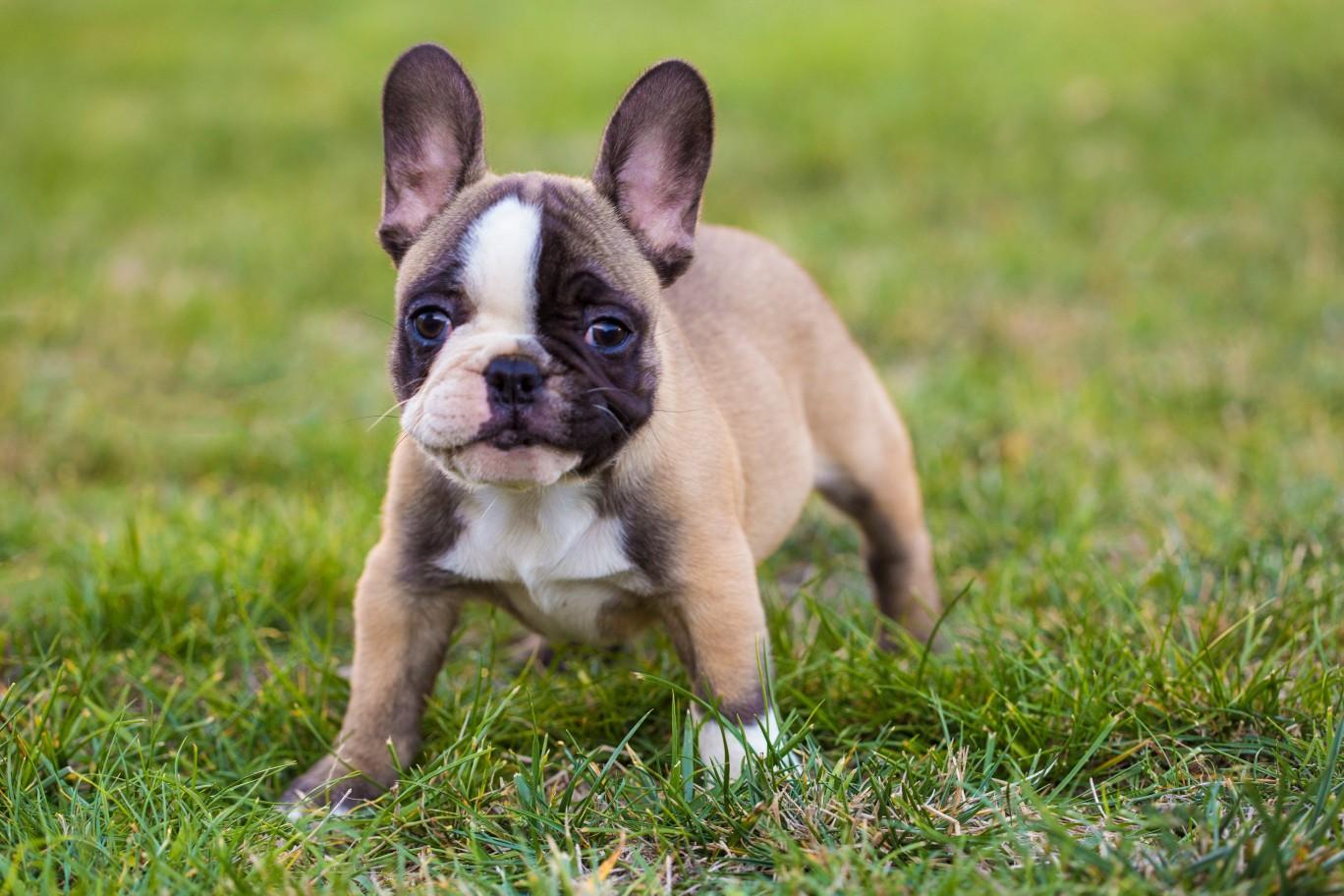 A puppy in a field