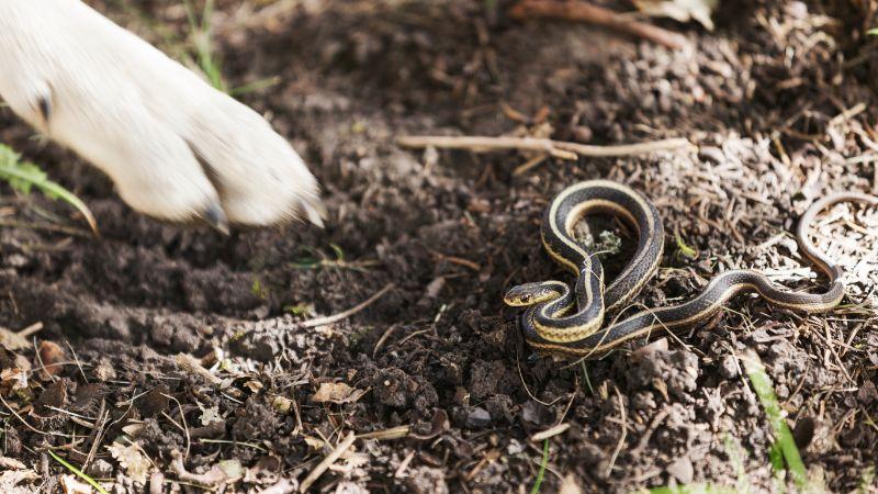 A dog's paw near a snake