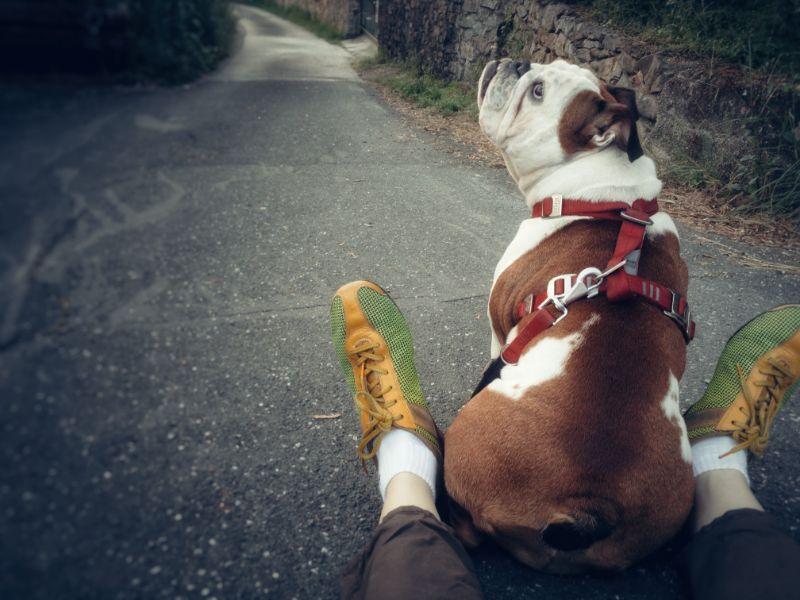 pet travel safety