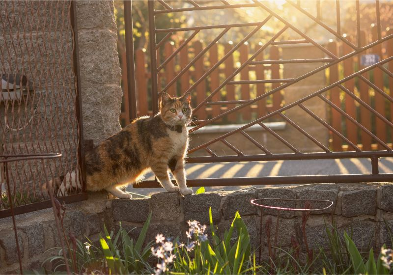 A cat in front of a gate