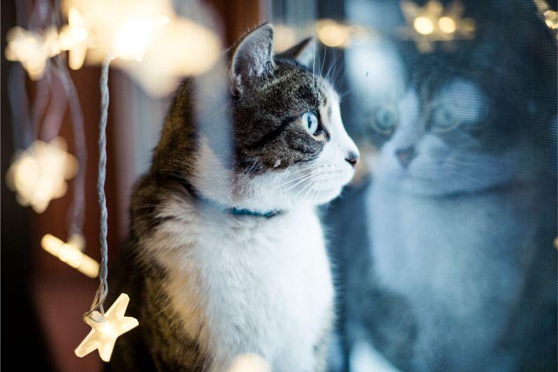 A cat sitting amongst decorations