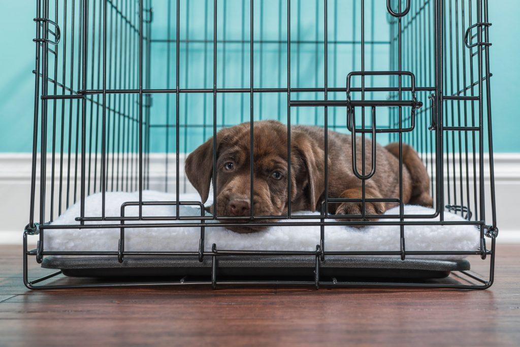 A dog in a crate