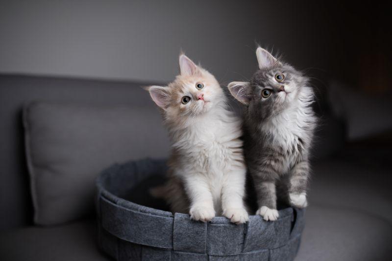 Two kittens tilting their heads