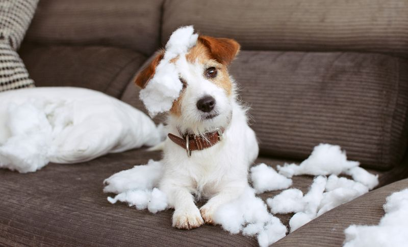 Dog toy stuffing