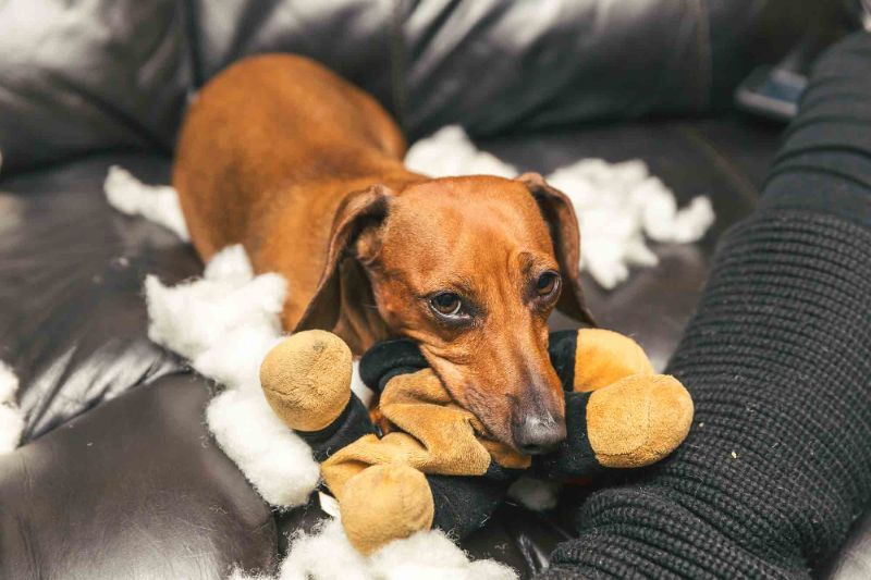 A sad dog laying with his toy