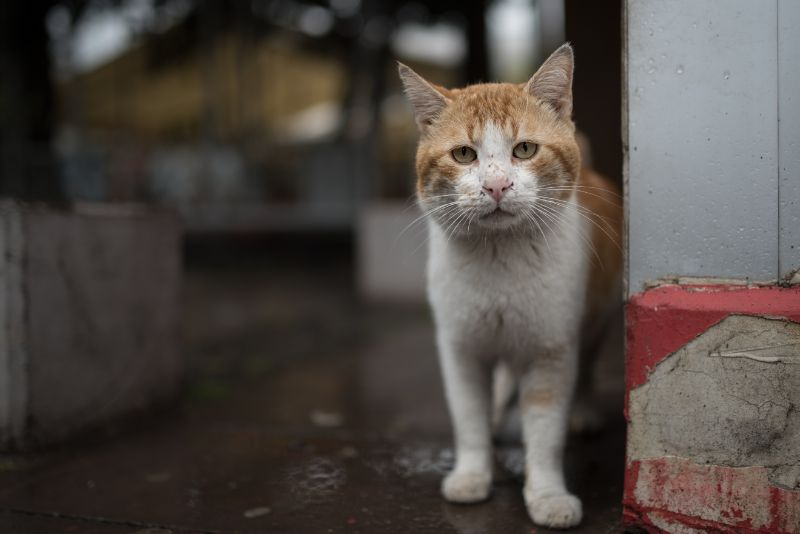A white and brown cat standing on the floor