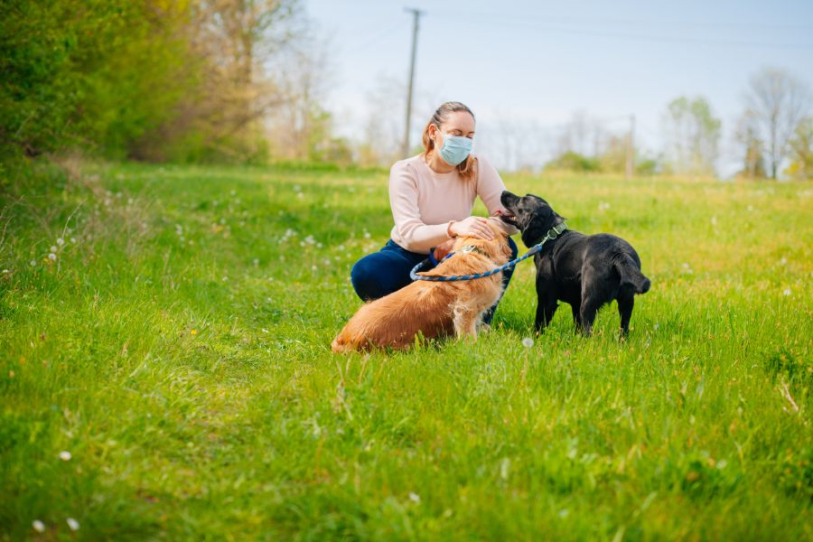 dog and puppy interacting with woman
