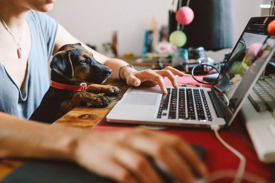 Working with your dog