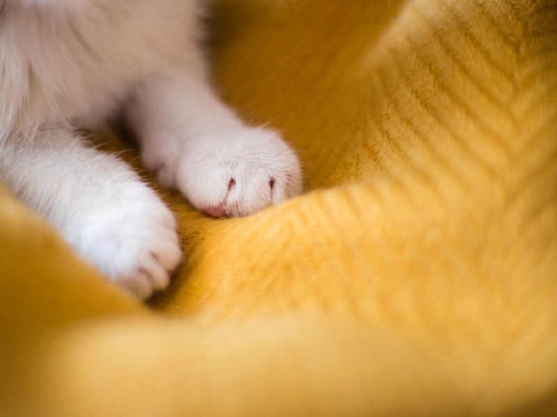 A cat's paws kneading