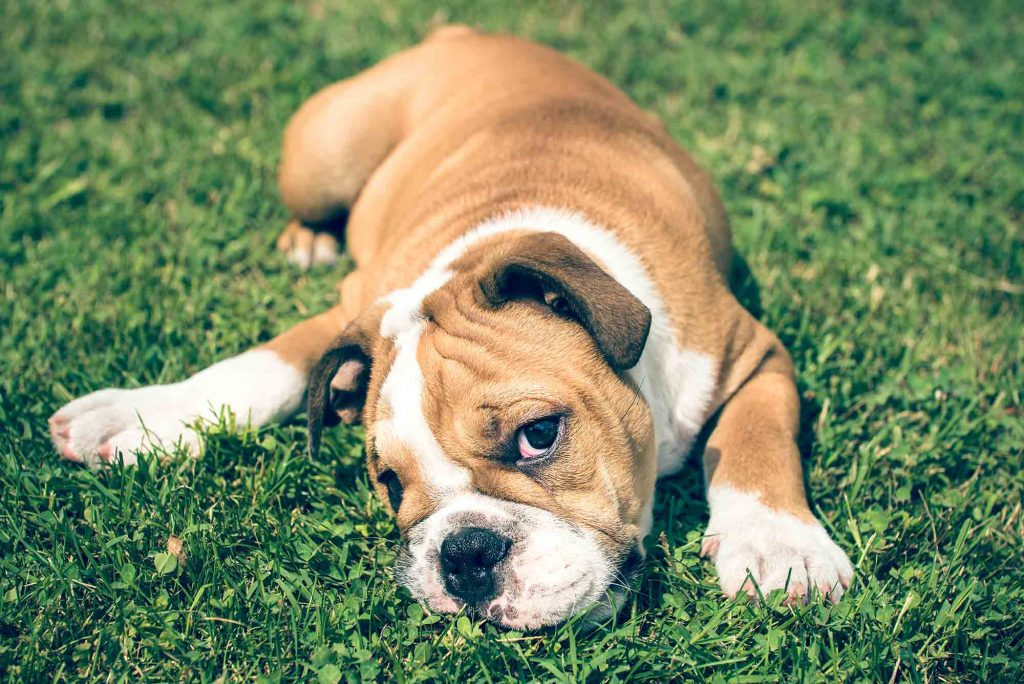 An active puppy rolling on the ground