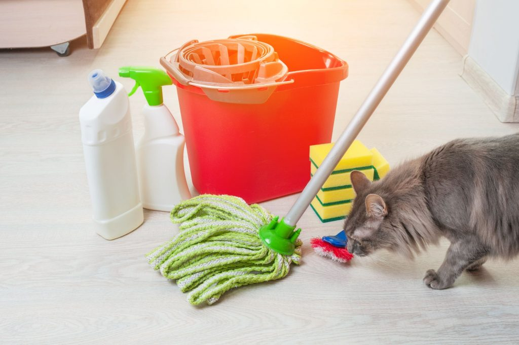 A cat sniffs some cleaning supplies.