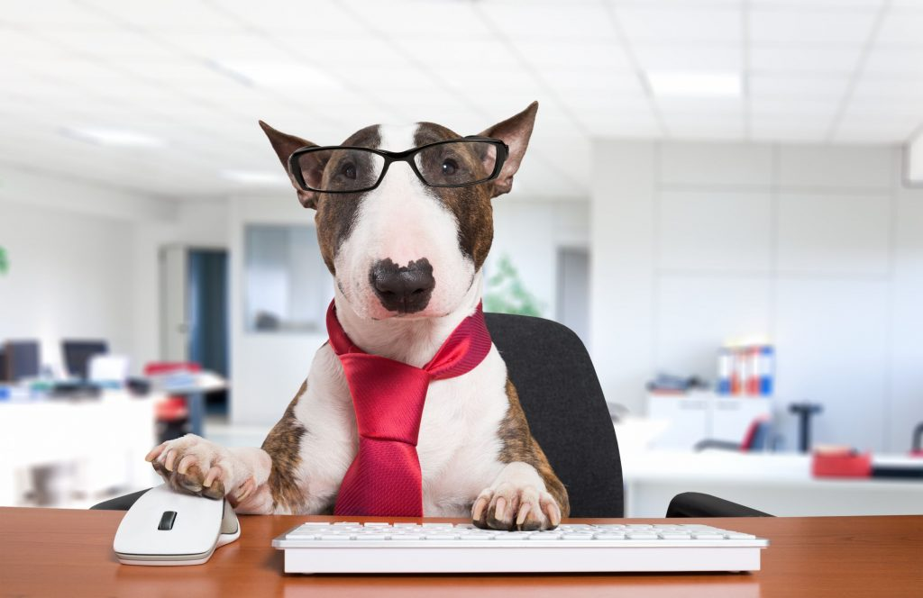 A dog in glasses and a tie sits at a computer.